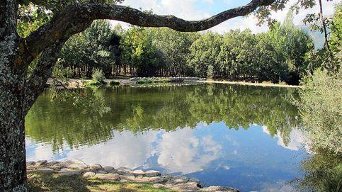 Vídeo: al amanecer suena el coro del alba en el río Lozoya