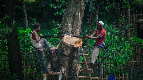 Los pueblos indígenas con un móvil podrían reducir un 20% la deforestación mundial