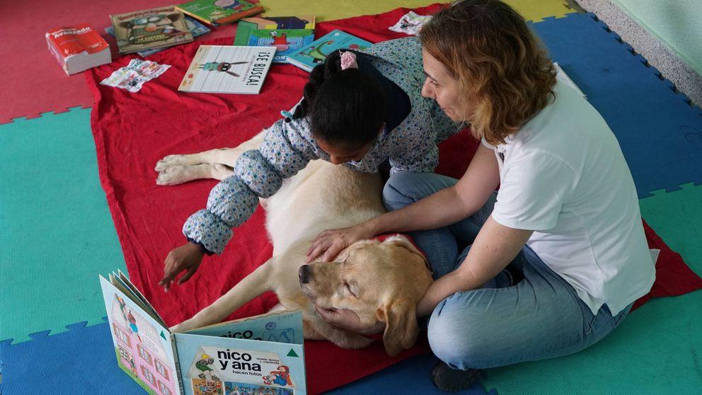 Ro-Ro, Bea y otros perros que ayudan a leer y socializar a niños de 50 colegios españoles