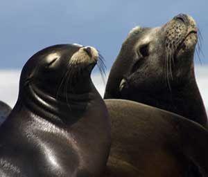 Varios autistas asisten a una terapia pionera con leones marinos
