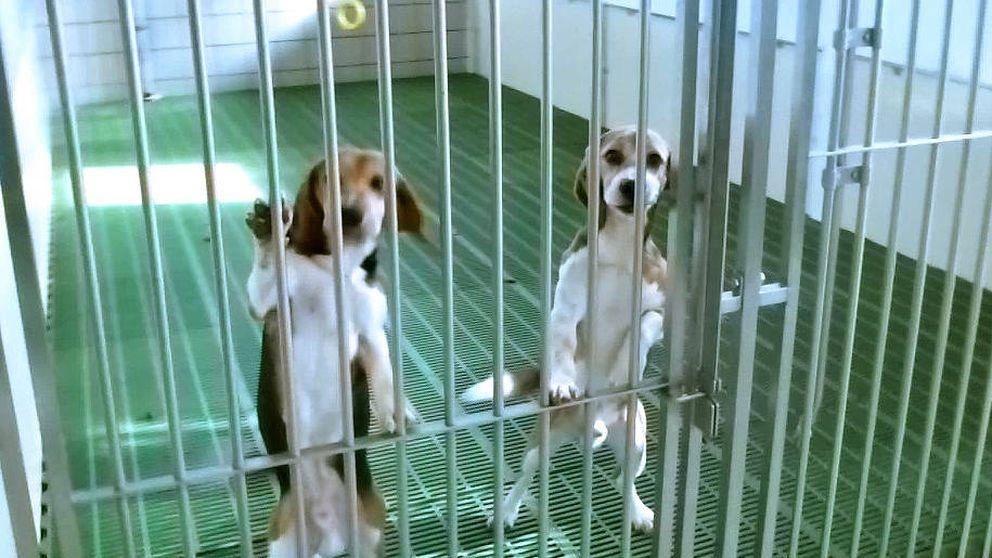 Bronca en Veterinaria de la Complutense por el estado de los perros para prácticas