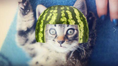 Ya puedes usar los nuevos filtros de Snapchat exclusivos para gatos