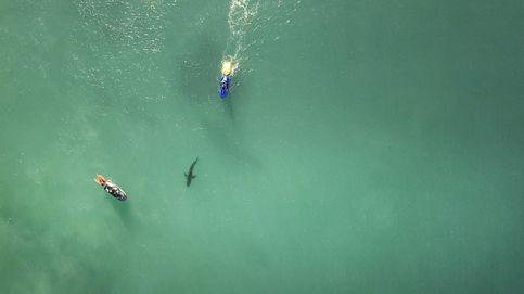 Un tiburón tigre surca las aguas de la playa de Miami