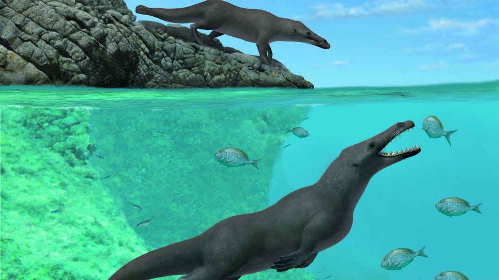 Foto: La peculiar ballena encontrada en Perú (Current Biology)