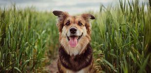 Post de Cinco gestos cotidianos que no deberías hacer con tu perro, según los veterinarios