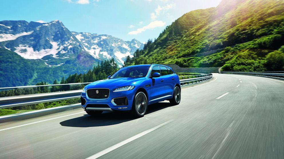 Jaguar sale al campo