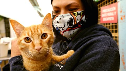 Los gatos se han vuelto más cariñosos durante el confinamiento