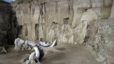 Descubierta la primera trampa para mamuts hecha por el hombre