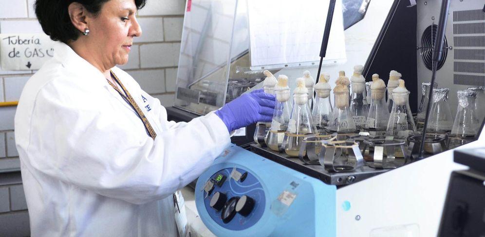 Foto: Un veterinario trabaja en un laboratorio. (EFE)