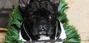 Post de Lady Gaga ofrece 500.000 dólares por la devolución de sus dos perros robados