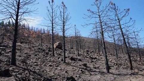 Los daños de los incendios forestales van más allá del efecto de las llamas