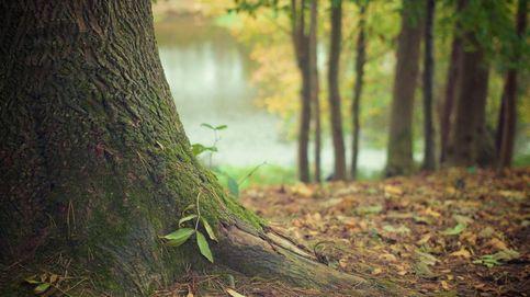 Carteras de inversión 'verdes': la oportunidad para apostar por el medio ambiente