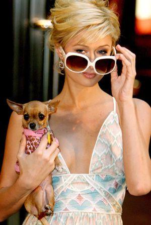 Paris Hilton contrata a David Guetta como profesor particular para convertirse en DJ