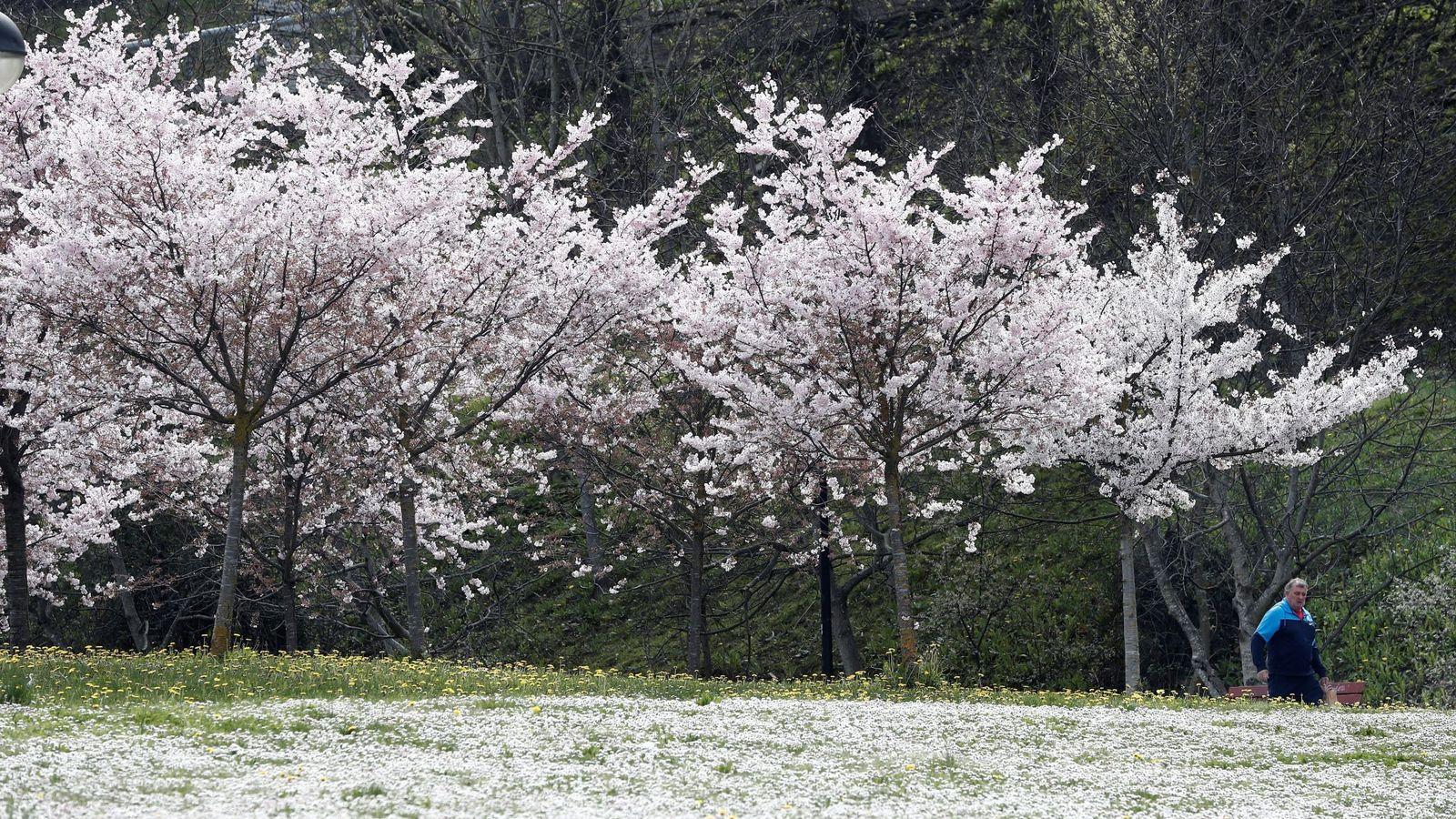 Así Son Los árboles Que Más Ayudan A Reducir La Contaminación