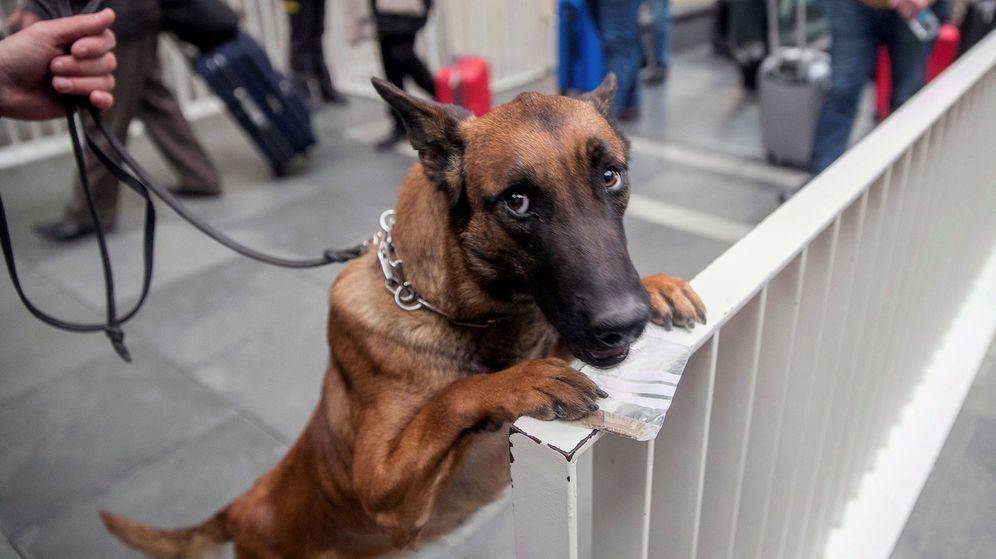 Foto: Los tres perros que se darán en adopción son un pastor alemán, un pastor belga y un labrador (EFE/Javier Cebollada)