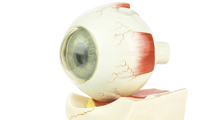 Foto: Encuentran la cura definitiva para la enfermedad ocular más extendida en el mundo. (iStock)