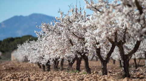 En unos años, todo esto será Murcia: el clima semiárido ha crecido 30.000 km2 desde 1989