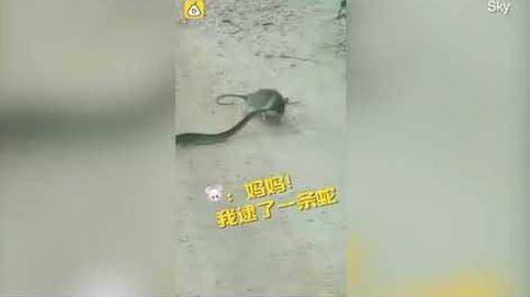 La pelea entre una rata y una serpiente con final inesperado