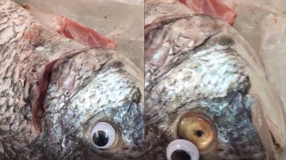 Foto: Un pez, con el ojo de plástico colocado (Foto: Twitter Al Bayan)