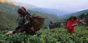 Post de Darjeeling, en los jardines del té