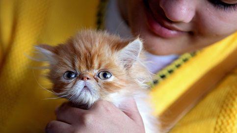 Ver vídeos de gatitos reduce el estrés y la ansiedad