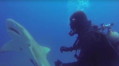 Un tiburón 'pide auxilio' a un buzo