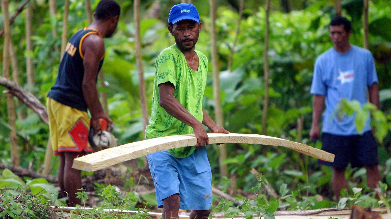 Trabajadores recogen madera de teca en el bosque de Sentani, en la provincia de Papúa. (Reuters)