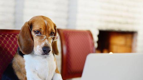 Sí, los perros saben contar (y lo hacen con la misma parte del cerebro que nosotros)