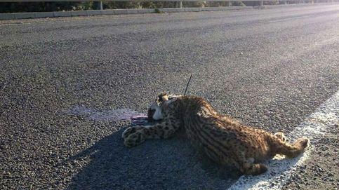 Evitemos que las cunetas se llenen de animales atropellados