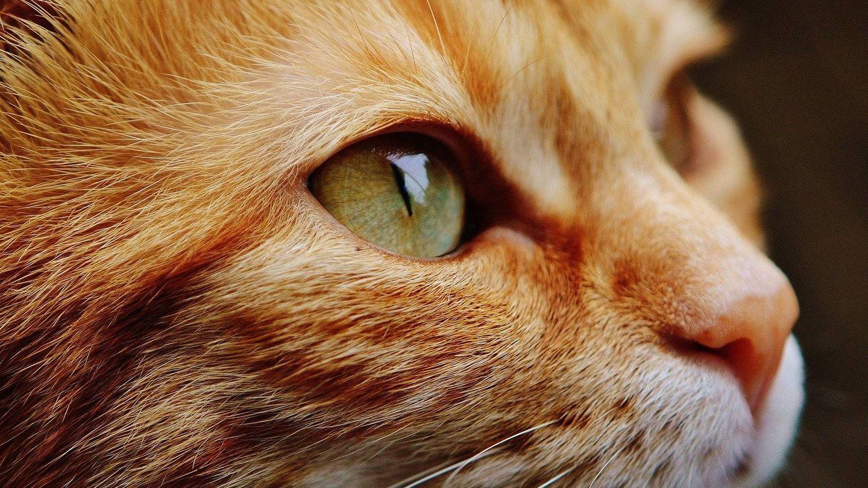 Los ojos del gato. (Pixabay)