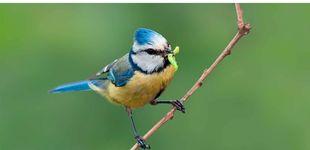 Post de Cuidar de la biodiversidad para proteger nuestra salud