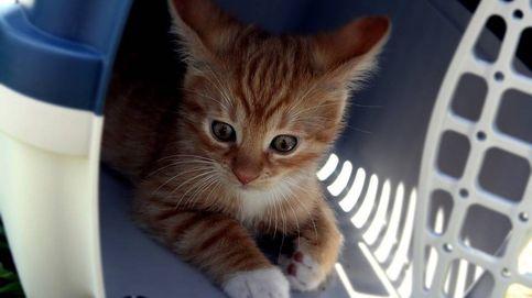 Los mejores transportines para gato para viajar seguro