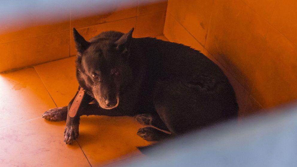 Un perro mata a un bebé de 18 días en una finca del sur de Tenerife