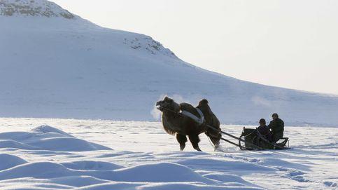 Cómo sobrevive un pastor nómada en Siberia