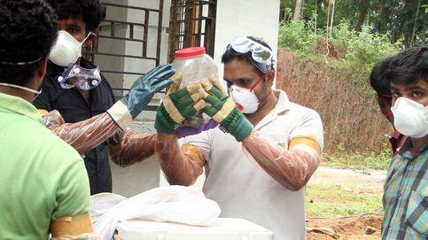 El virus que no tiene cura: se llama Nipah y ha matado ya a 10 personas