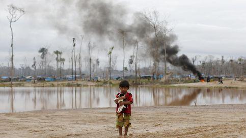 Así están talando la selva los 'okupas' amazónicos mientras el mundo no mira