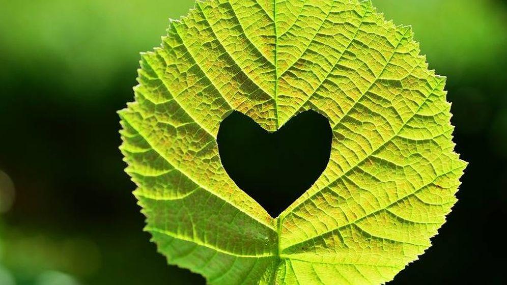 Foto: Corazón verde. (Pixabay)