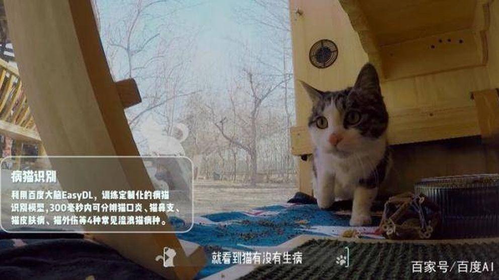 Este invento confirma que la inteligencia artificial es más útil para gatos que humanos