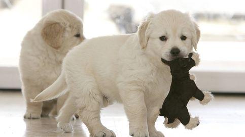 Prisión para los propietarios de una tienda de mascotas por la muerte de varios cachorros