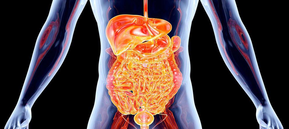 El interior del cuerpo humano como nunca antes lo hab amos visto noticias de tecnolog a - Interior cuerpo humano organos ...