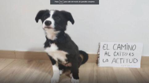 Los profesores del Colegio Público Ramón y Cajal dedican un vídeo a sus alumnos