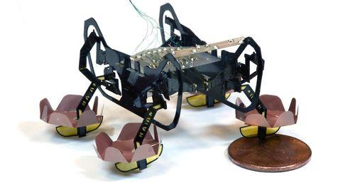 Un robot de última generación capaz de moverse bajo el agua: llega la cucaracha 2.0