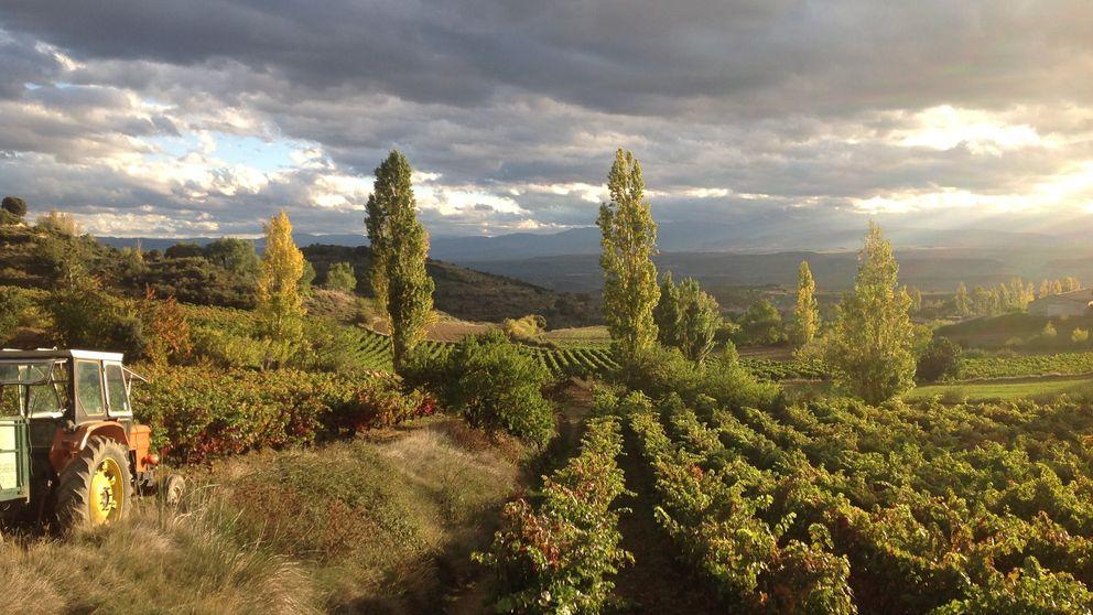 Maridajes vino a vino: Verdejo