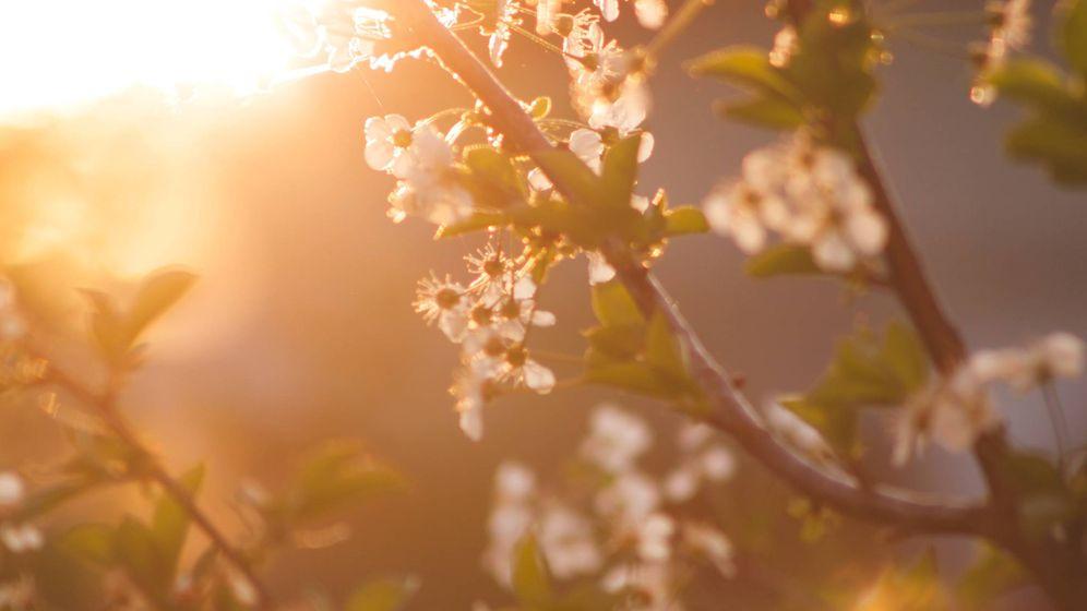 Foto: Finales de la primavera, principios de verano y finales del otoño, principios de invierno las estaciones que nuestro organismo percibe