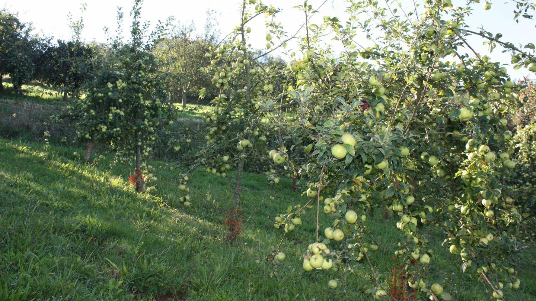 Manzanales ecológicos
