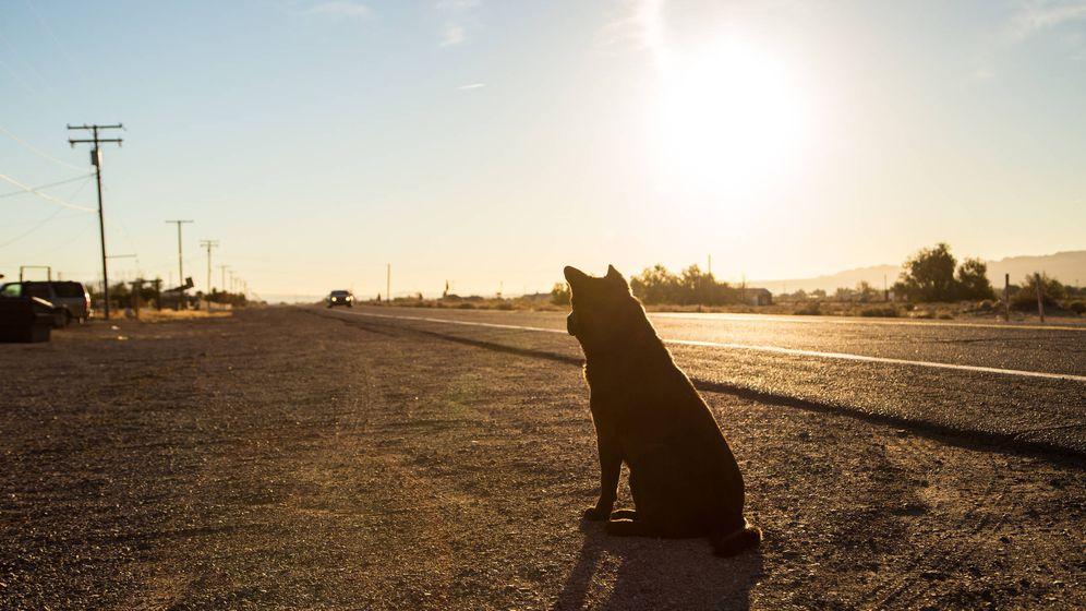 Foto: Perro en la carretera (iStock)