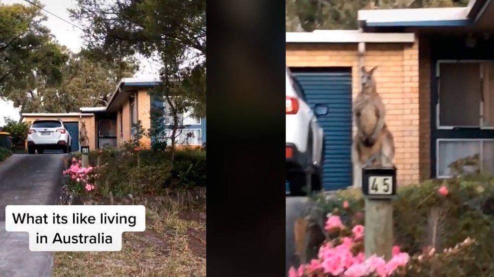 Graban a un canguro que ejerce como guardia de seguridad en una casa