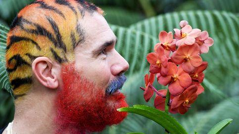 Festival de orquídeas Kew Gardens y conocer a Vincent van Gogh en Londres: el día en fotos