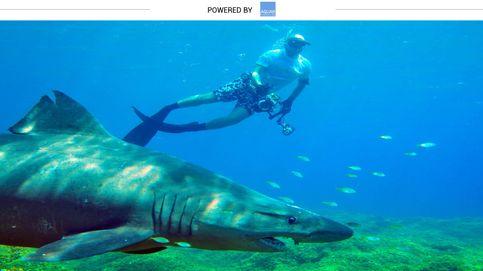 ¿Te dan miedo los tiburones? Tranquilo, este es uno de los más dóciles del mundo