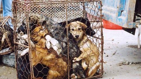 Vietnam intenta que los habitantes de la capital dejen de comer carne de perro